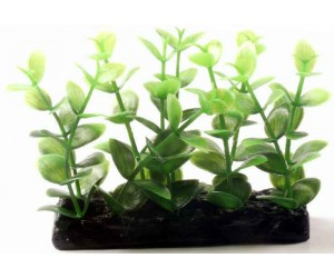 Aquarium plants 10.2cm H-4